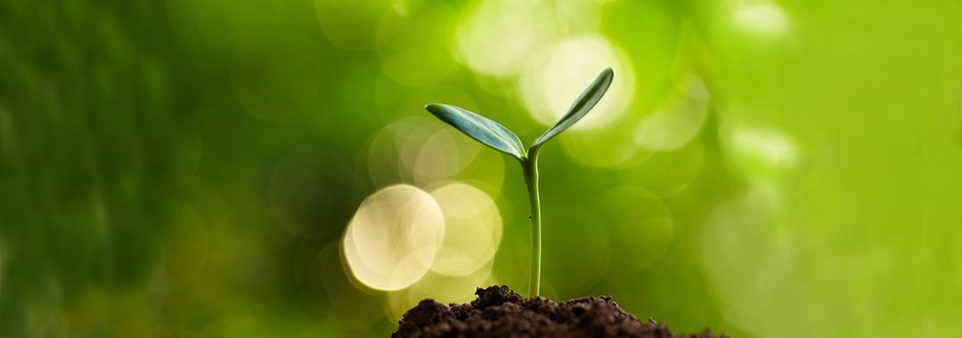 Wachstum gestalten | Margit Bieg
